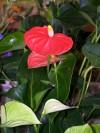 Zemina pro pokojové rostliny 20l - foto2