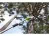 Aku prořezávač větví Greenworks G40PS20 40V - foto4